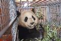 南航派专机圆满完成奥运大熊猫进京飞行任务
