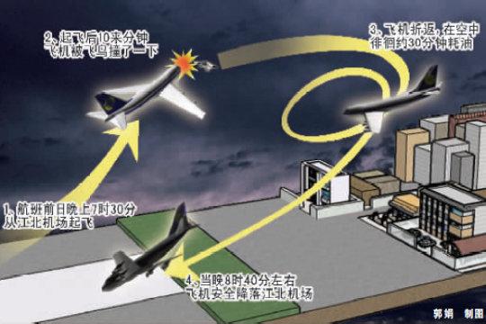 夜航飛機幾千米高空撞上飛鳥 被迫折返降落
