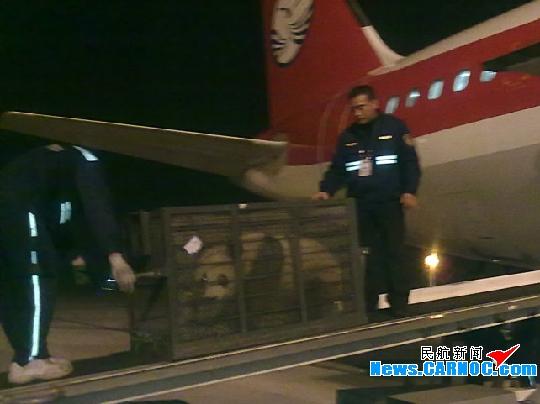 民航资源网2010年11月9日消息:日前,两只国宝大熊猫乘3u8915航班