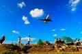 """图:巫家坝机场承载了近一个世纪风云激荡,在中国航空史上镌刻下浓墨重彩的画卷:它是继杭州机场之后,中国第二个机场;它是抗战时期最繁忙的军民两用机场;两航起义时,国内只有两航昆明站(巫家坝机场)参加起义。<a href=http://pic.feeyo.com target=_blank>民航图库</a>图片,摄影:民航资源网网友""""<a href=http://pic.feeyo.com/photo.jsp?userid=3618 target=_blank>namelz52</a>""""。(浏览作者图库原帖《<a href=http://pic.feeyo.com/posts/534/5342713.html target=_blank>[原创]【永远的巫家坝,永远的菜地】……</a>》)"""
