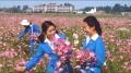 上世纪八十年代,每逢十月左右,正是国庆花盛开的季节,机场跑道两边到处都是一片片的国庆花。