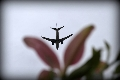 当飞机路过花朵——见证钢铁之躯与自然之美