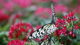 Butterfly garden at the Changi Airport's Terminal 3. A team of 10 horticulturists manage 150 gardeners and are constantly looking for ways to keep the airport plants looking fresh and vibrant.  -- ST PHOTO: Kevin Lim
