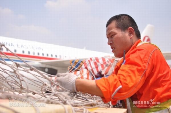 烈日下,机坪装卸员一天工作纪实