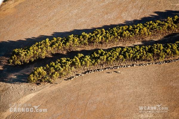 空客:小桉树可成航空生物燃油可持续原料来源