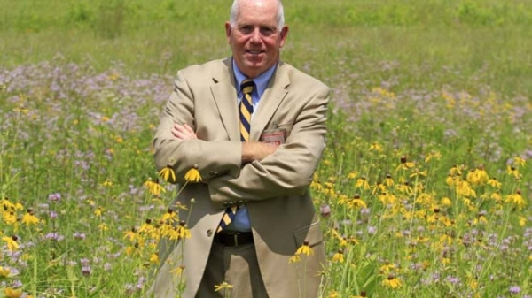 美国鸟击年损失58亿 机场出新招种高大牧草