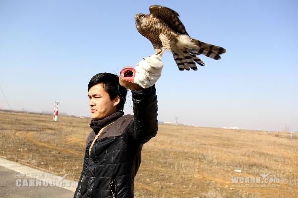 """合肥新桥国际机场尝试""""猎鹰驱鸟"""""""
