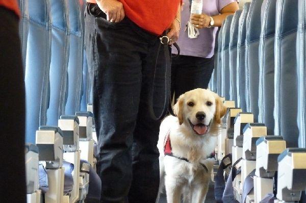 达美禁止宠物作为行李托运 明年3月生效
