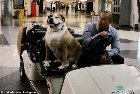 盘点年度上头条航空旅客:头等舱的胖子汪