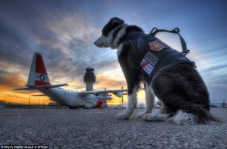 Piper is the only Wildlife Control K-9 on staff at an airport in Michigan and the airport believes one of less than ten in the United States