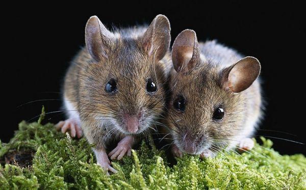 老鼠大闹天宫 长龙航空机舱内上演