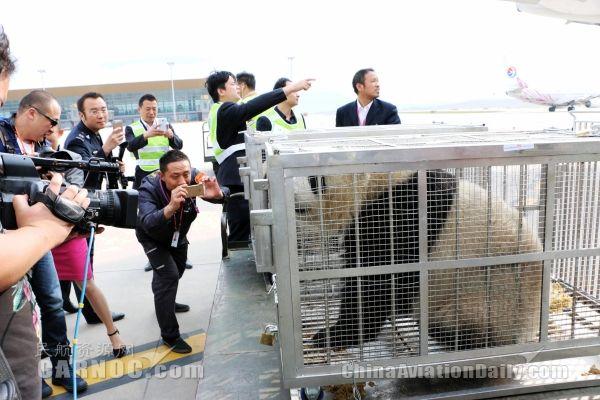 """""""萌宠""""熊猫乘飞机抵昆 机场享受明星级接待"""