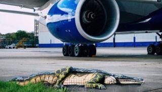 """英航脑洞真大!放只""""鳄鱼""""在跑道上吸引人?"""