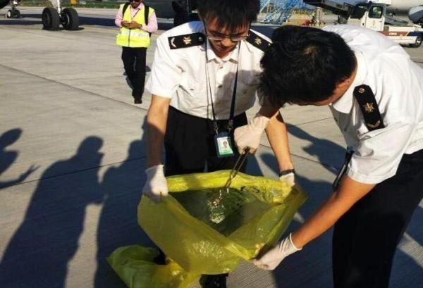 马代飞西安航班捕获一活蛇 在毛毯袋中被发现