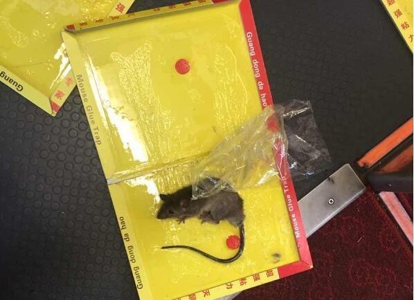 老鼠藏客机舱门咬出缺口 安全隐患究竟多大?