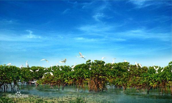 北海地处广西壮族自治区北部湾东北岸,是中国最美的海滨城市之一.