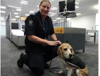 新西兰机场检疫罚单暴增 中国游客被罚数第三