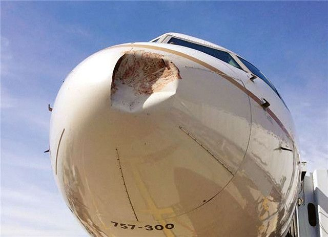 图片 飞机遭鸟撞发动机最受伤 新技术增强抗打击力 民航新闻 民航资源网
