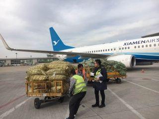 天津机场货运公司双11国内货量破历史同期记录