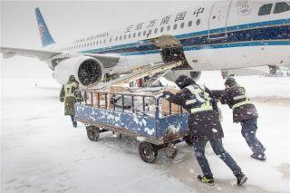 行李装卸员顶风冒雪把拖斗艰难的推向飞机货舱门 (摄影:陈松)