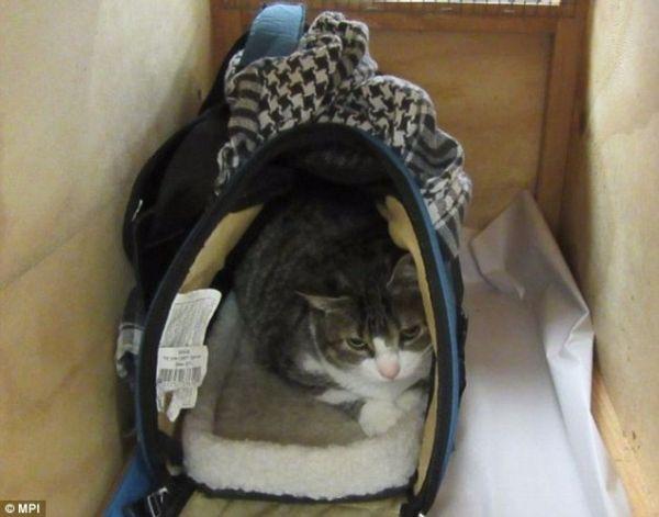 猫痴手提包藏猫 闯关新西兰机场遭抓包遣返