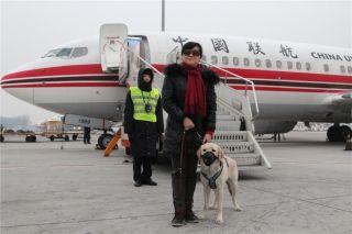 中国联航圆满完成导盲犬陪同旅客运输任务