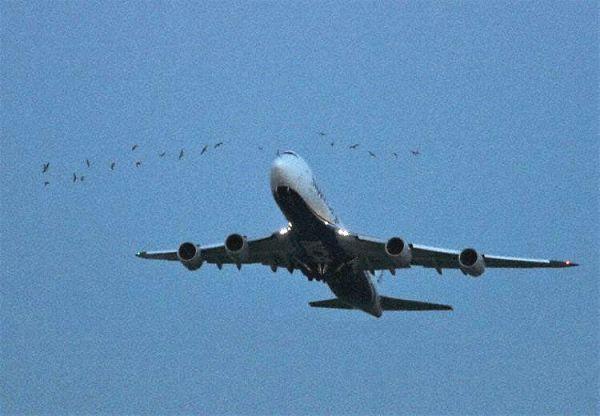 货机爬升时遇20只飞鸟 挡风玻璃遭4只飞鸟撞击