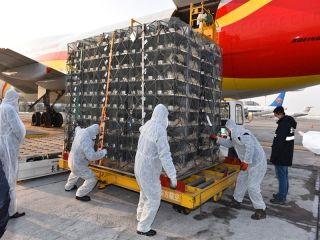 长春机场首次完成大吨位活体动物全货机保障