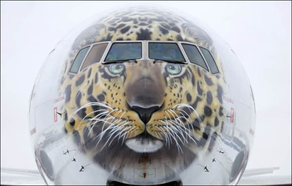 """俄罗斯国家航空推出""""阿穆尔豹""""彩绘涂装777-300"""