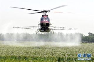 山东郯城:3架直升机空中施药防治71万亩小麦