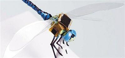 基因改造术让蜻蜓变身活体微型无人机