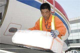 头顶骄阳似火,地服部搬运工麻利地 装卸着旅客的行李,因为他们知道,航班的安全正点才是第一位的。