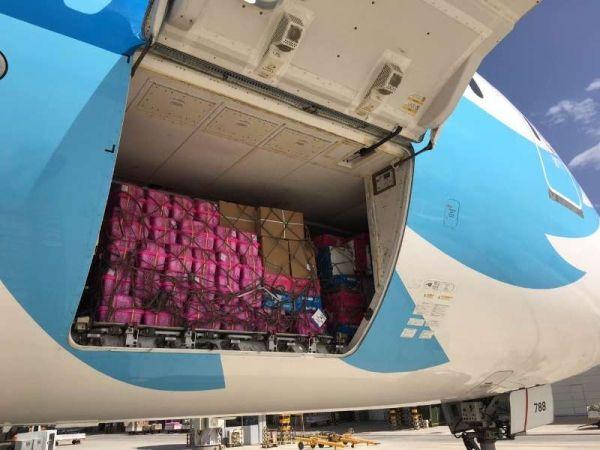 1100吨水果飞出疆 西梅占五成