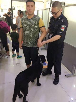"""南通机场迎来""""特殊旅客""""  导盲犬也可坐飞机"""