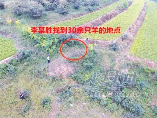 村民20余只羊被盗 民警利用无人机侦查追回