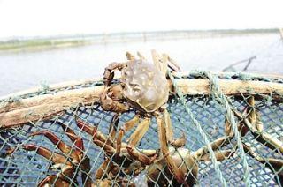 一季的生鲜螃蟹货物从南京机场空运全国各地