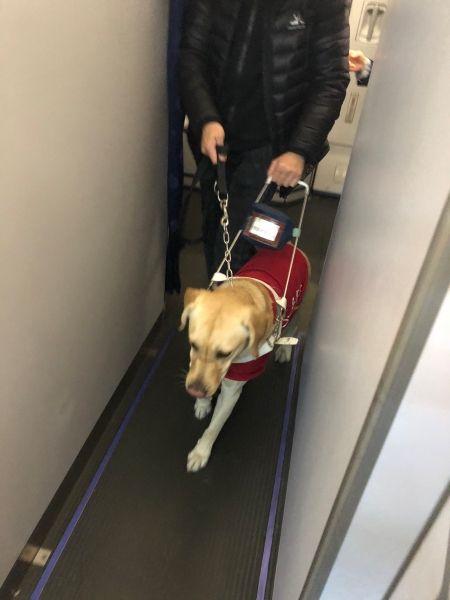 东航北京:导盲犬诺诺乘机记