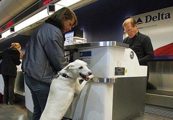 飞机客舱内动物事件激增 达美将收紧申请标准