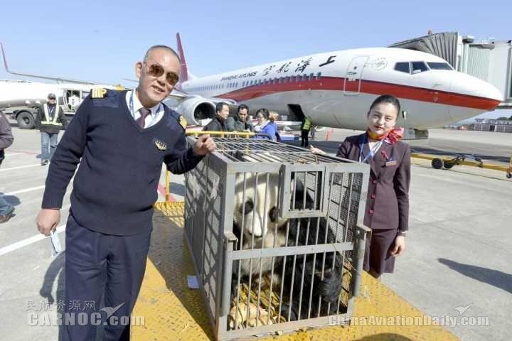 """东航精心保障大熊猫""""华龙""""回家过年"""