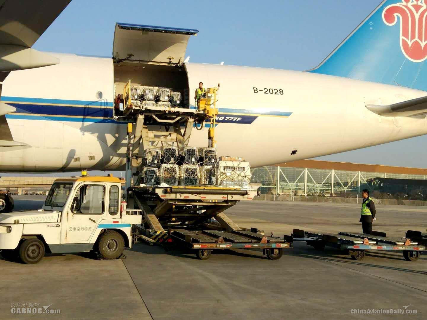 67只工作犬乘南航B777F货机抵达春城