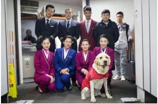 导盲犬首次搭乘民航班机,赴疆参加公益活动