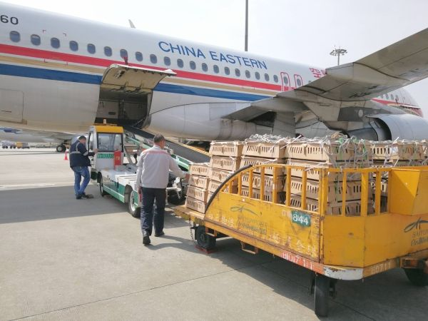 """白云机场货运日均45万禽苗""""乘机""""出港"""