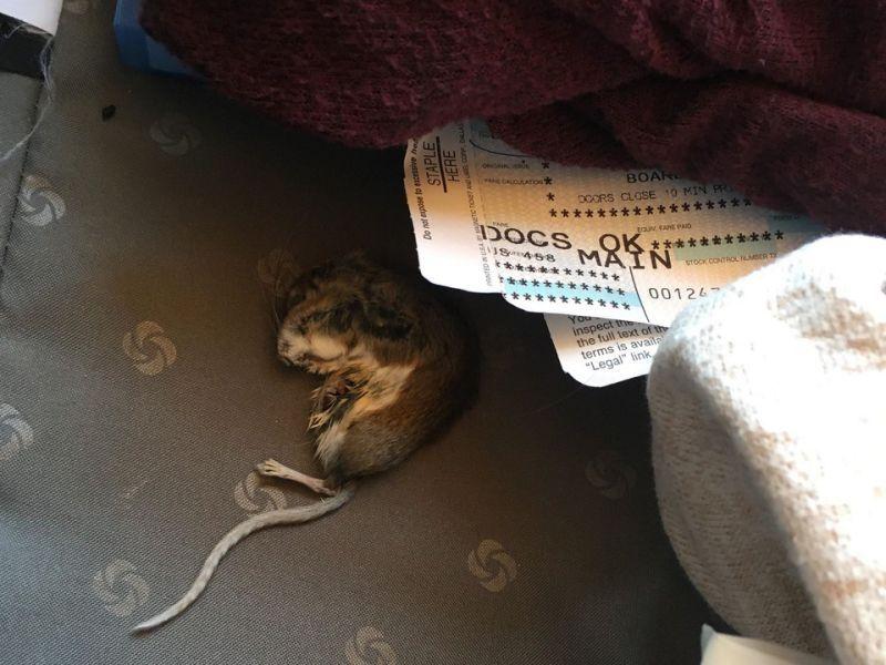 旅行结束后 美航乘客在托运行李中发现死老鼠