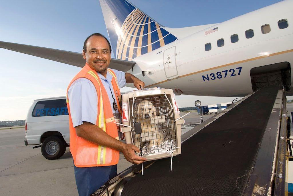 美联航将恢复宠物运输 禁运25个宠物种类