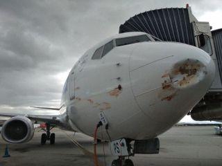 欧罗巴航空客机进近时遭遇多次鸟击