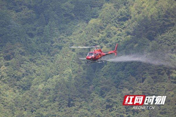 飞行12架次!衡阳用直升机撒药防治森林病虫害