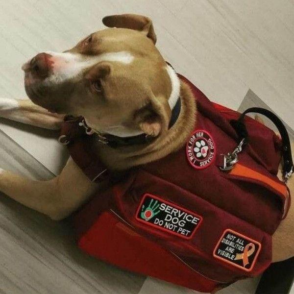 美航空组织欲将情感支撑动物仅限定于犬类