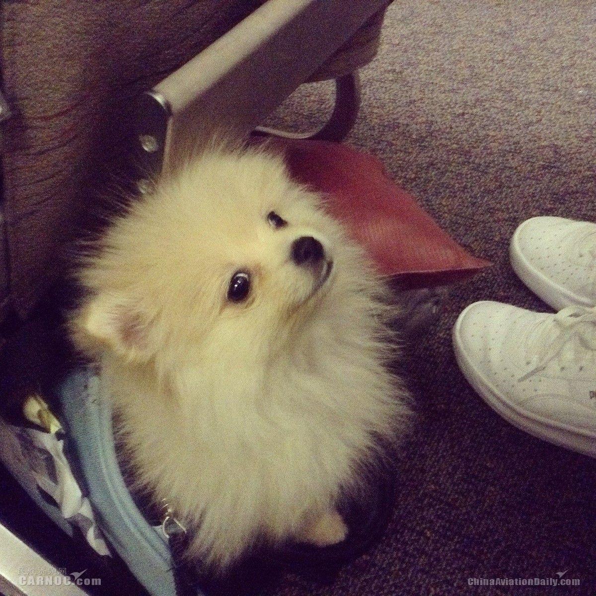 美航企强烈要求限制旅客携带宠物乘机