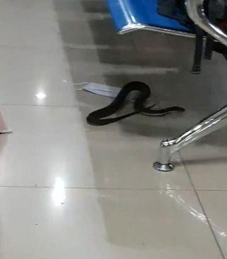 菲律宾机场休息室惊现食鼠蛇 乘客大惊失色