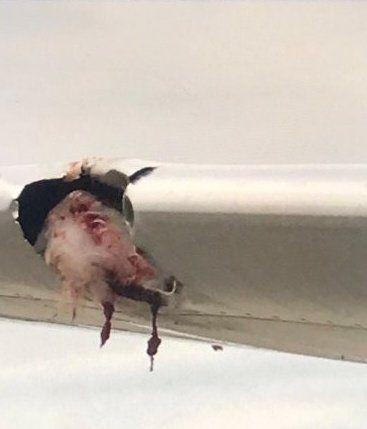 美西南航空客机在九千英尺高空遭遇鸟击 被迫返航最终安全降落匹兹堡